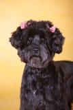 狗宠物 免版税库存图片