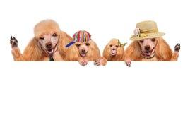 狗家庭。 库存图片