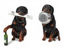 狗对象 免版税库存照片