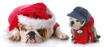 狗小狗圣诞老人 免版税库存照片