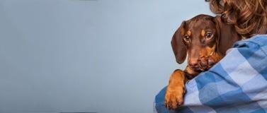 狗小狗在男孩的肩膀的品种达克斯猎犬,少年和 免版税库存照片