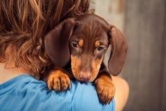 狗小狗在男孩,少年的肩膀的品种达克斯猎犬 免版税库存照片