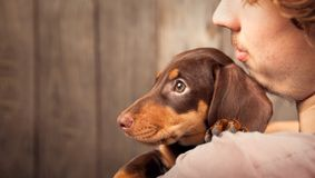 狗小狗在男孩,少年a的肩膀的品种达克斯猎犬 免版税图库摄影