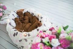 狗小狗是被隔绝的睡觉 库存照片