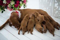 狗小狗是被隔绝的睡觉 免版税图库摄影