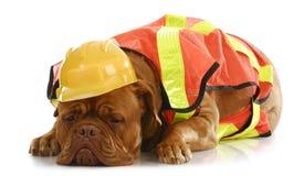 狗工作 免版税库存照片