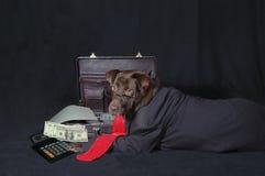 狗工作 库存照片