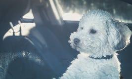 狗左单独在汽车 免版税库存照片