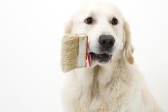 狗帮助 免版税图库摄影