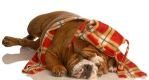 狗帽子佩带的冬天 免版税库存图片