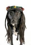 狗帽子佩带 免版税图库摄影