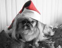 狗帽子圣诞老人 库存照片
