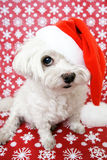 狗帽子圣诞老人 库存图片