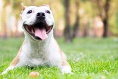 狗幸福 库存照片