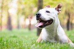狗幸福 免版税图库摄影
