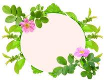 狗开花框架粉红色上升了 免版税库存图片