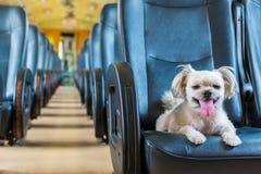 狗很逗人喜爱在一列铁路火车里面等待旅行 免版税库存照片
