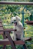 狗很逗人喜爱在椅子 库存照片