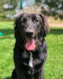 狗微笑 免版税图库摄影
