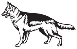 狗德国牧羊犬传染媒介illus装饰常设画象  库存例证