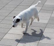 狗快速地跑步行的A喜爱 免版税库存图片