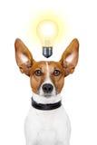 狗想法 免版税库存照片