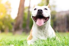 狗愉快的纵向 免版税库存照片