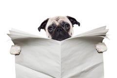 狗报纸 免版税库存图片