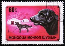 狗拉布拉多猎犬,大约1978年 库存照片
