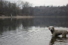 狗探险家 免版税库存图片