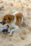 狗提供的女孩 免版税库存图片