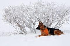 狗救助者 免版税库存照片