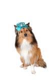狗新年好 免版税库存图片