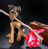 狗旅行 免版税库存图片