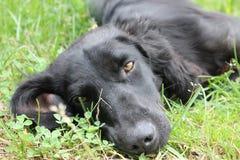 狗是忠诚和情感的 免版税库存照片