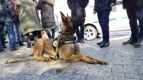 狗是救护设备 库存图片