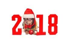 狗是2018个年和数字的标志 免版税库存照片