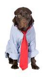 狗智能工作 免版税库存图片