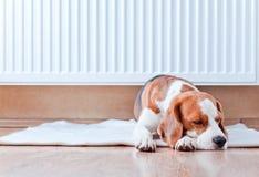 狗有休息近到一台温暖的幅射器 免版税库存照片