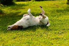 狗有躺下在绿草的弛豫时间在阴影 库存照片
