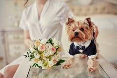 狗服装新郎嗅到的花束在新娘的手上 库存照片
