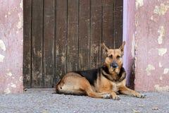 狗杂散的街道 库存图片