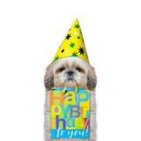 狗来了到某人的与礼物的生日 免版税库存照片