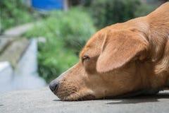 狗梦想 库存照片