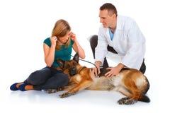 狗检查的女孩她的狩医年轻人 免版税库存图片