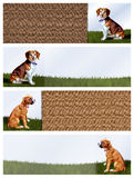 狗横幅 库存照片