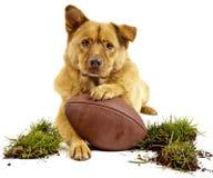 狗橄榄球 免版税库存图片