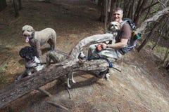 狗步行者在森林 库存图片