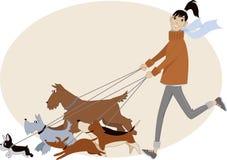 狗步行者 免版税图库摄影