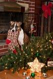 狗毁坏圣诞节 免版税库存图片